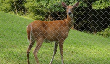 Great Cheap Deer Fence
