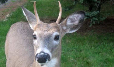 About Long Lasting Deer Repellents
