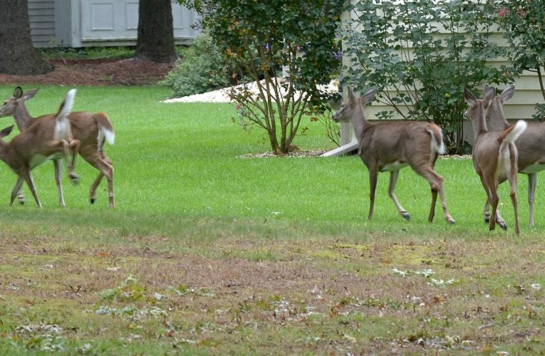Deer Proof: Boot Camp for Humans